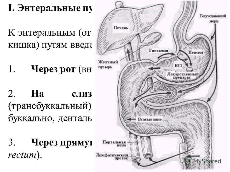 I. Энтеральные пути введения К энтеральным (от греч. ento – внутри и enteron – кишка) путям введения относятся: 1.Через рот (внутрь, пероральный, per os); 2.На слизистую полости рта (трансбуккальный) - лингвально, сублингвально, буккально, дентально