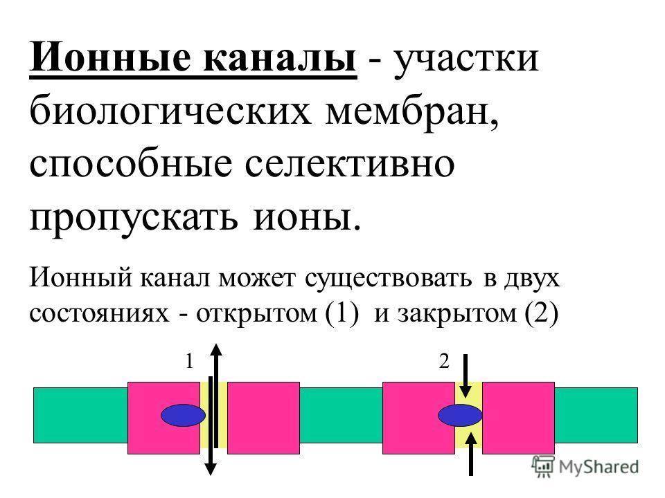 Ионные каналы - участки биологических мембран, способные селективно пропускать ионы. Ионный канал может существовать в двух состояниях - открытом (1) и закрытом (2) 1 2