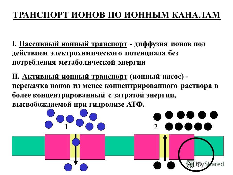 ТРАНСПОРТ ИОНОВ ПО ИОННЫМ КАНАЛАМ I. Пассивный ионный транспорт - диффузия ионов под действием электрохимического потенциала без потребления метаболической энергии II. Активный ионный транспорт (ионный насос) - перекачка ионов из менее концентрирован