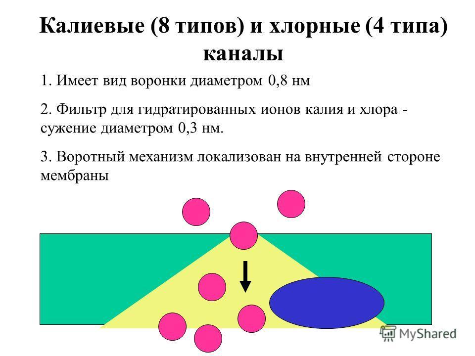 Калиевые (8 типов) и хлорные (4 типа) каналы 1. Имеет вид воронки диаметром 0,8 нм 2. Фильтр для гидратированных ионов калия и хлора - сужение диаметром 0,3 нм. 3. Воротный механизм локализован на внутренней стороне мембраны