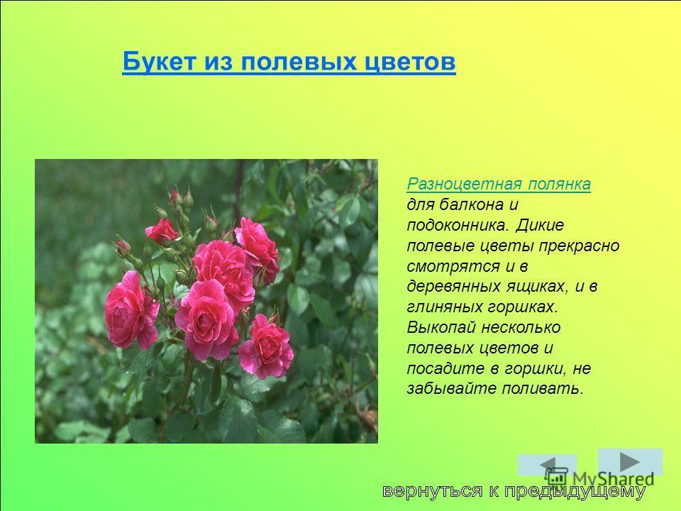 Букет из полевых цветов Разноцветная полянка Разноцветная полянка для балкона и подоконника. Дикие полевые цветы прекрасно смотрятся и в деревянных ящиках, и в глиняных горшках. Выкопай несколько полевых цветов и посадите в горшки, не забывайте полив