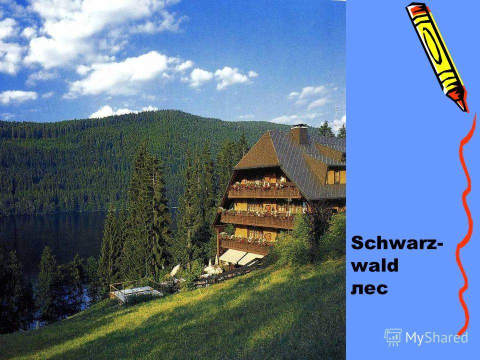Schwarz- wald лес