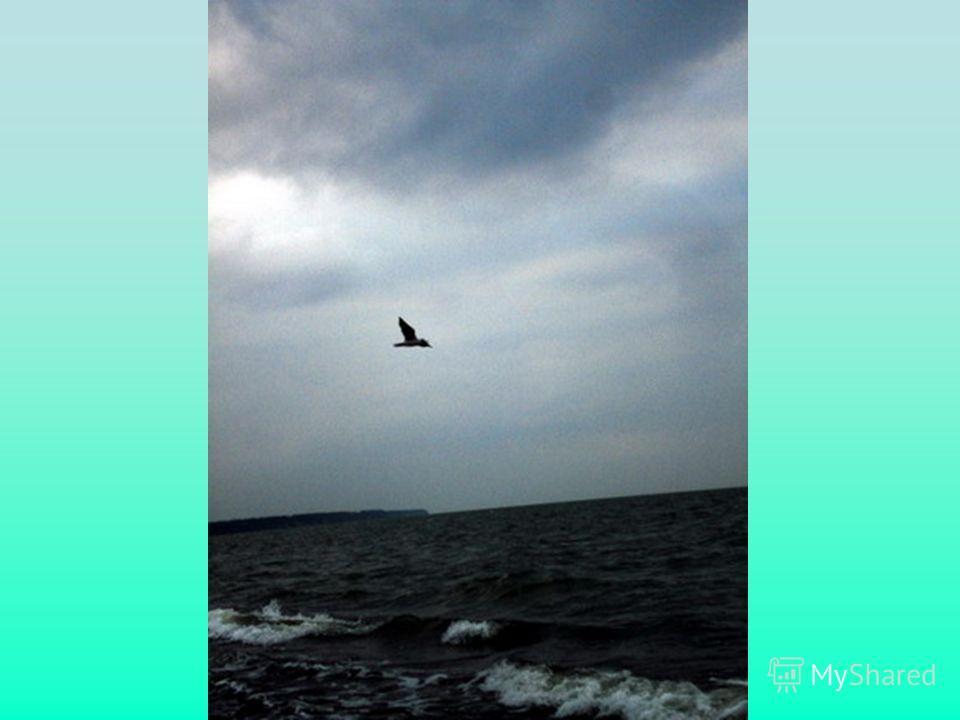 Я в шторм качаюсь на волнах.