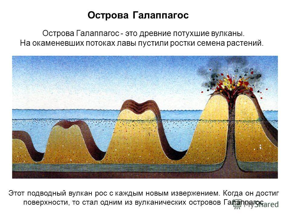 Острова Галаппагос Острова Галаппагос - это древние потухшие вулканы. На окаменевших потоках лавы пустили ростки семена растений. Этот подводный вулкан рос с каждым новым извержением. Когда он достиг поверхности, то стал одним из вулканических остров
