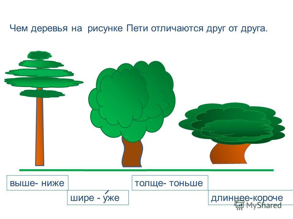 Чем деревья на рисунке Пети отличаются друг от друга. выше- нижетолще- тоньше длиннее-короче шире - уже