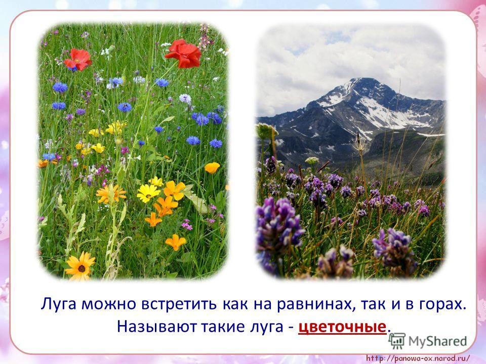 Луга можно встретить как на равнинах, так и в горах. Называют такие луга - цветочные.