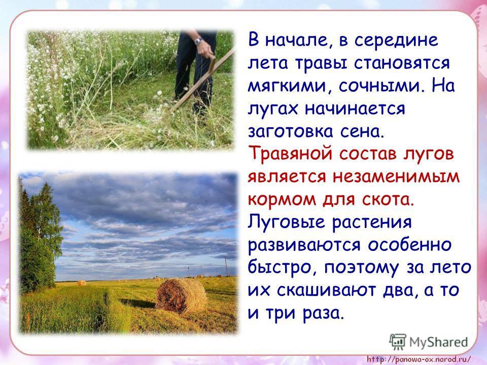 В начале, в середине лета травы становятся мягкими, сочными. На лугах начинается заготовка сена. Травяной состав лугов является незаменимым кормом для скота. Луговые растения развиваются особенно быстро, поэтому за лето их скашивают два, а то и три р