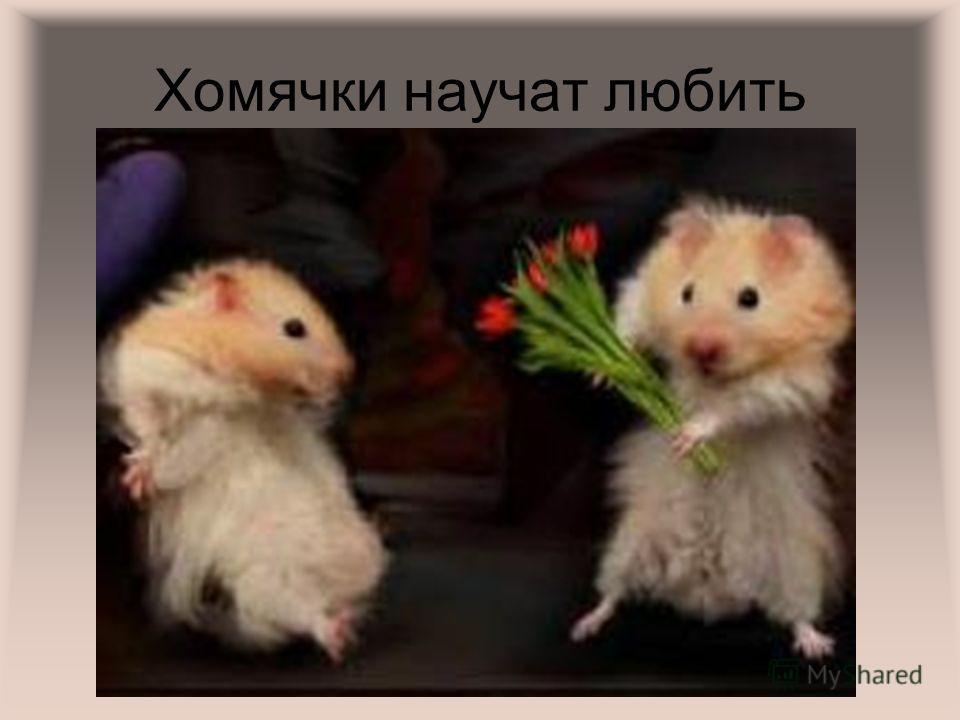 Хомячки научат любить