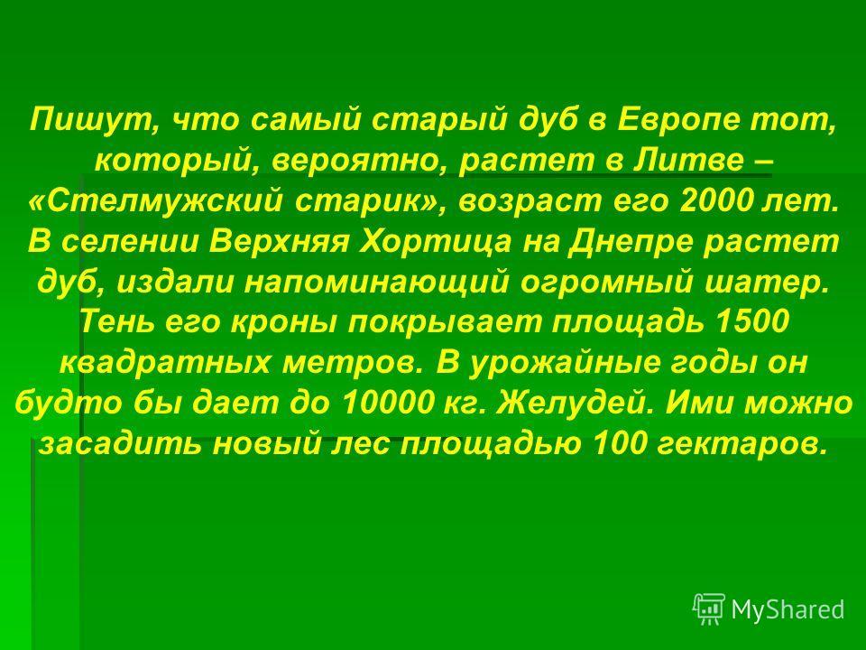 Пишут, что самый старый дуб в Европе тот, который, вероятно, растет в Литве – «Стелмужский старик», возраст его 2000 лет. В селении Верхняя Хортица на Днепре растет дуб, издали напоминающий огромный шатер. Тень его кроны покрывает площадь 1500 квадра