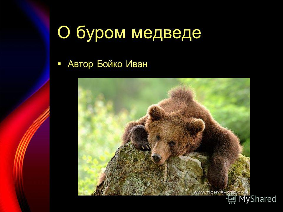 О буром медведе Автор Бойко Иван