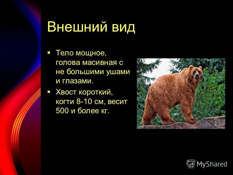 Внешний вид Тело мощное, голова масивная с не большими ушами и глазами. Хвост короткий, когти 8-10 см, весит 500 и более кг.