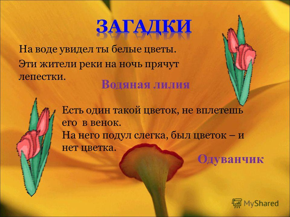 На воде увидел ты белые цветы. Эти жители реки на ночь прячут лепестки. Водяная лилия Есть один такой цветок, не вплетешь его в венок. На него подул слегка, был цветок – и нет цветка. Одуванчик