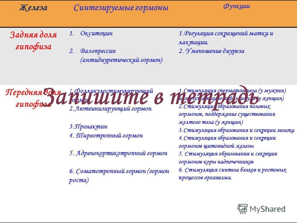 ЖелезаСинтезируемые гормоны Функции Задняя доля гипофиза 1.Окситоцин 2.Вазопрессин (антидиуретический гормон) 1.Регуляция сокращений матки и лактации. 2. Уменьшение диуреза Передняя доля гипофиза 1.Фолликулостимулирующий гормон 2.Лютеинизирующий горм