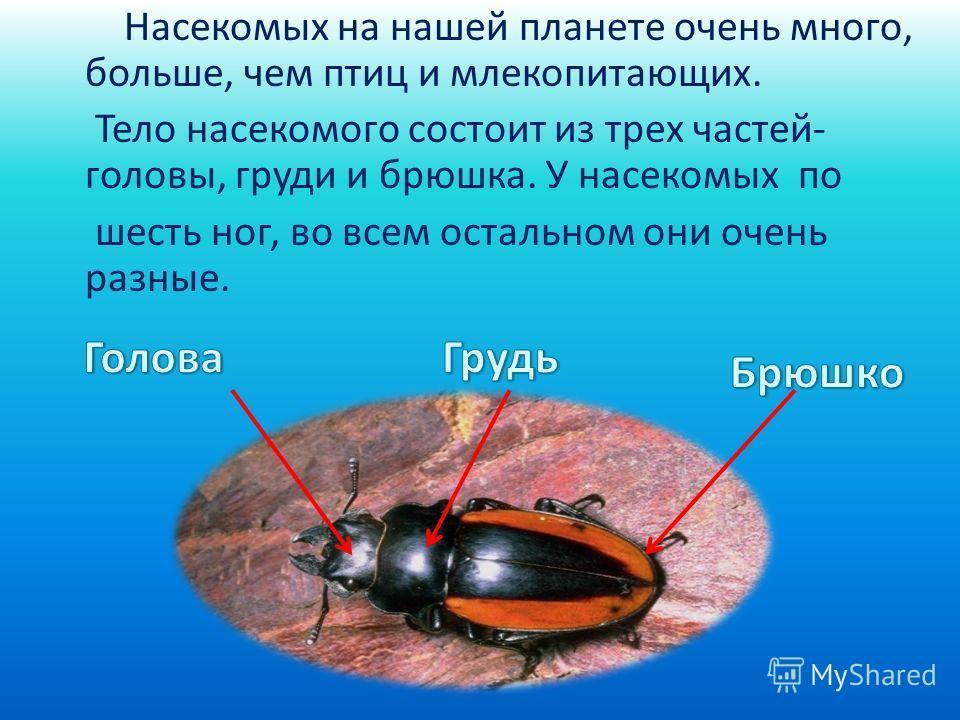 Насекомых на нашей планете очень много, больше, чем птиц и млекопитающих. Тело насекомого состоит из трех частей- головы, груди и брюшка. У насекомых по шесть ног, во всем остальном они очень разные.