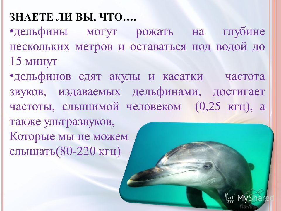ЗНАЕТЕ ЛИ ВЫ, ЧТО…. дельфины могут рожать на глубине нескольких метров и оставаться под водой до 15 минут дельфинов едят акулы и касатки частота звуков, издаваемых дельфинами, достигает частоты, слышимой человеком (0,25 кгц), а также ультразвуков, Ко