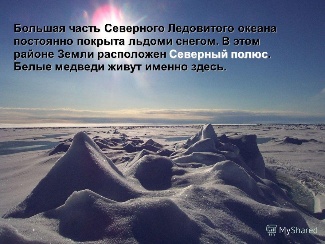 Большая часть Северного Ледовитого океана постоянно покрыта льдоми снегом. В этом районе Земли расположен Северный полюс. Белые медведи живут именно здесь.