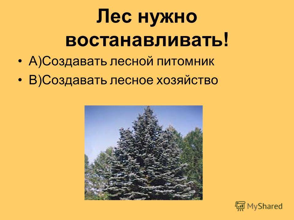 Лес нужно востанавливать! А)Создавать лесной питомник В)Создавать лесное хозяйство