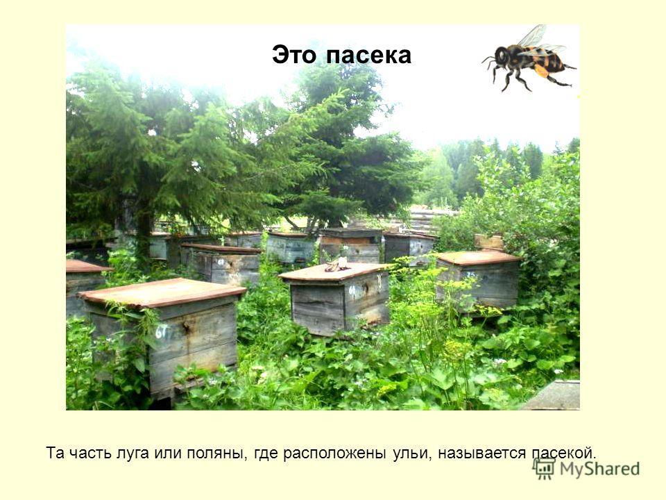 Это пасека Та часть луга или поляны, где расположены ульи, называется пасекой.