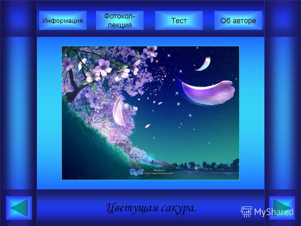 Цветущая сакура. Фотокол- лекция Информация ТестОб авторе