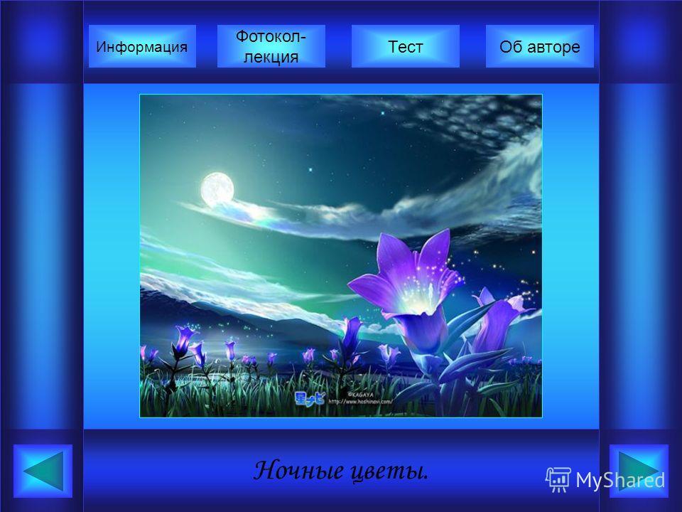 Ночные цветы. Фотокол- лекция Информация ТестОб авторе