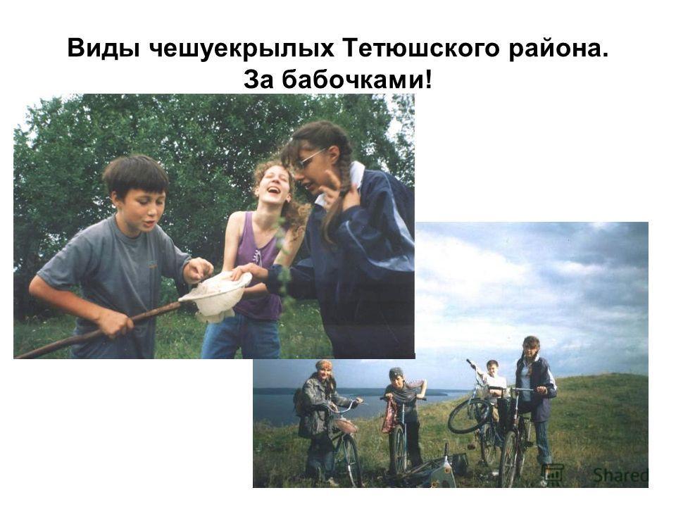 Виды чешуекрылых Тетюшского района. За бабочками!