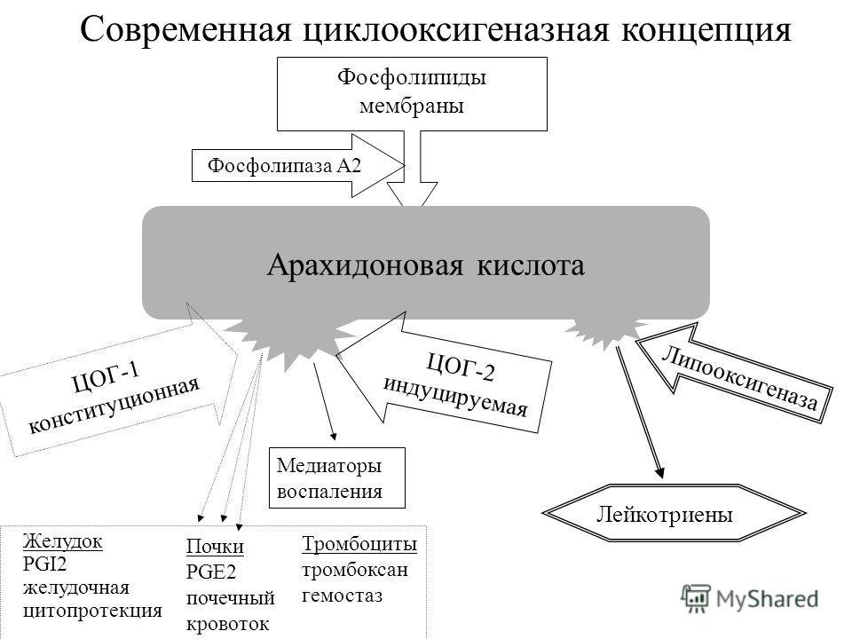 Современная циклооксигеназная концепция Фосфолипиды мембраны Арахидоновая кислота Фосфолипаза А2 ЦОГ-1 конституционная ЦОГ-2 индуцируемая Желудок PGI2 желудочная цитопротекция Почки PGE2 почечный кровоток Тромбоциты тромбоксан гемостаз Лейкотриены Ме