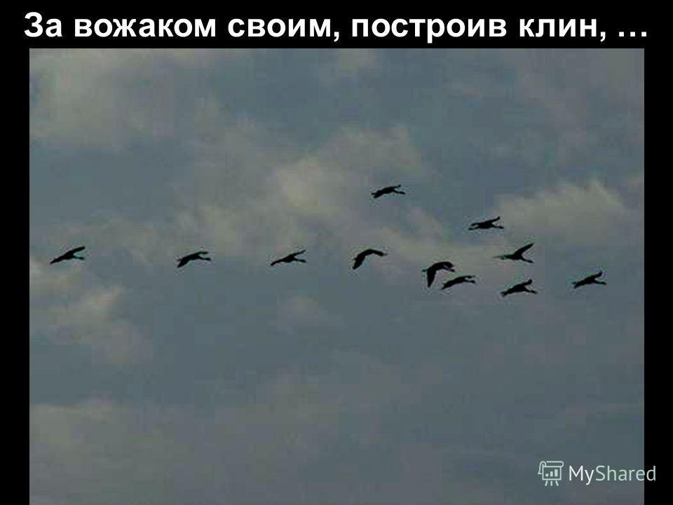 Опять летят по небу журавли,