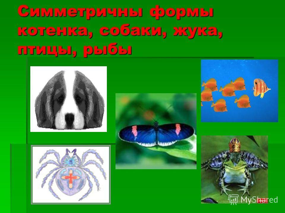 Симметричны формы котенка, собаки, жука, птицы, рыбы