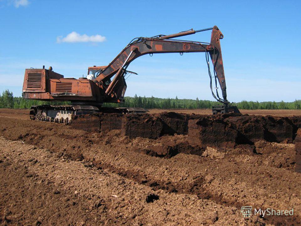 Скопление остатков растений подвергшихся неполному разложению в условиях болот благоприятствует образованию торфа. Особая роль при этом принадлежит сфагнуму. Торф (в сухом виде)– горючее вещество. Его используют на электростанциях для получения элект