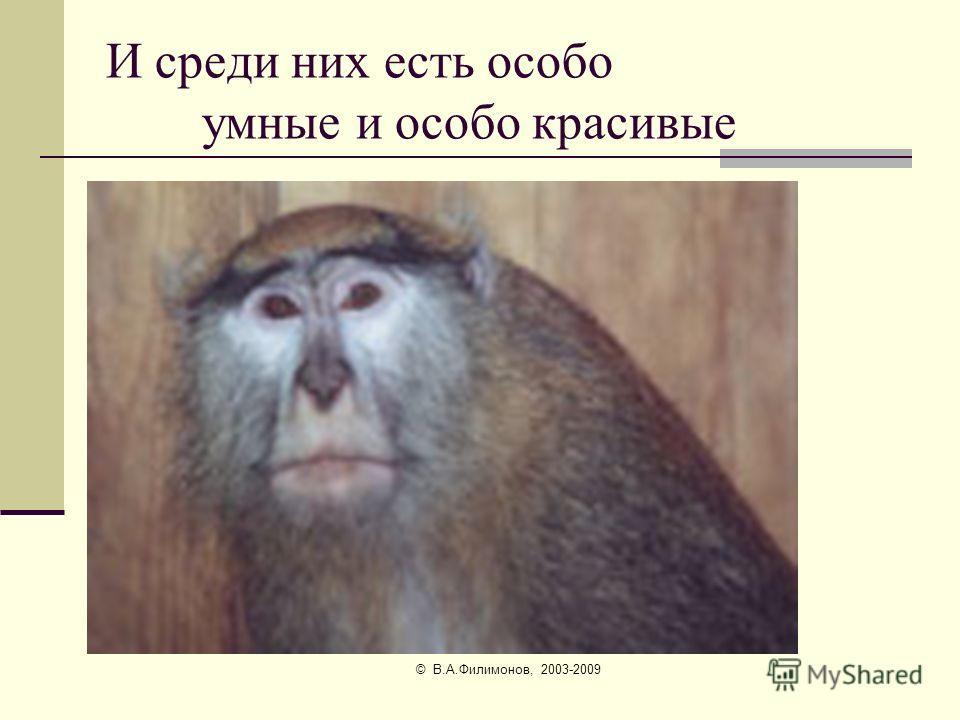 © В.А.Филимонов, 2003-2009 И есть красивые