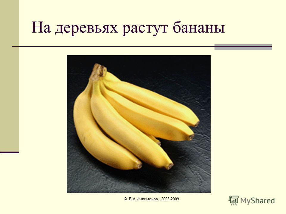 © В.А.Филимонов, 2003-2009 Ещё там цветут банановые деревья