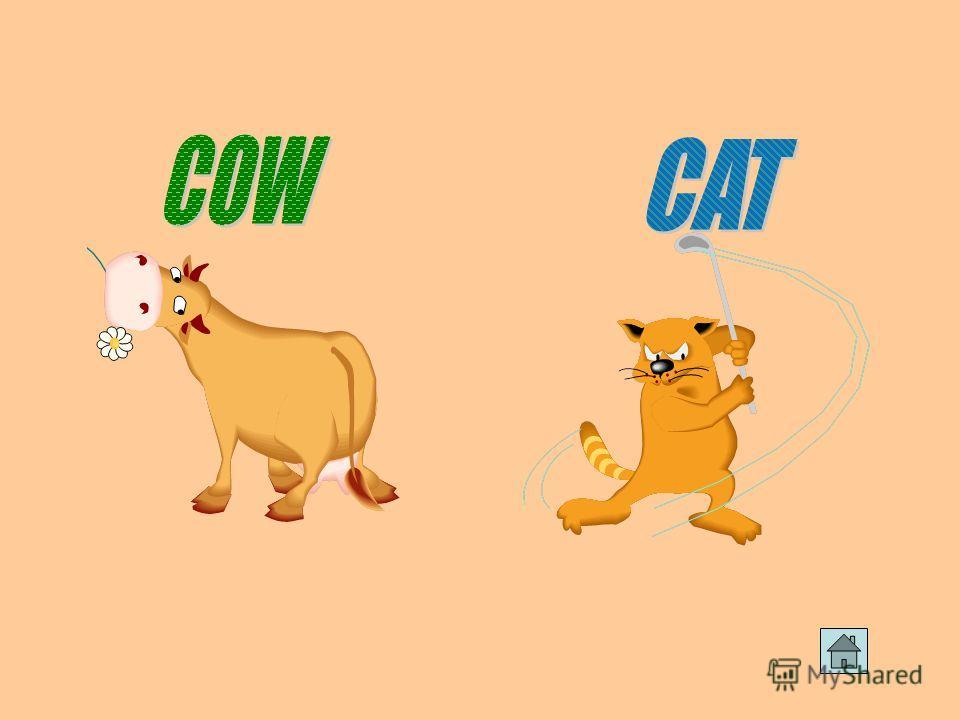 Буква Сc очень любит автомобильные гонки, своего кота и корову.котакорову.