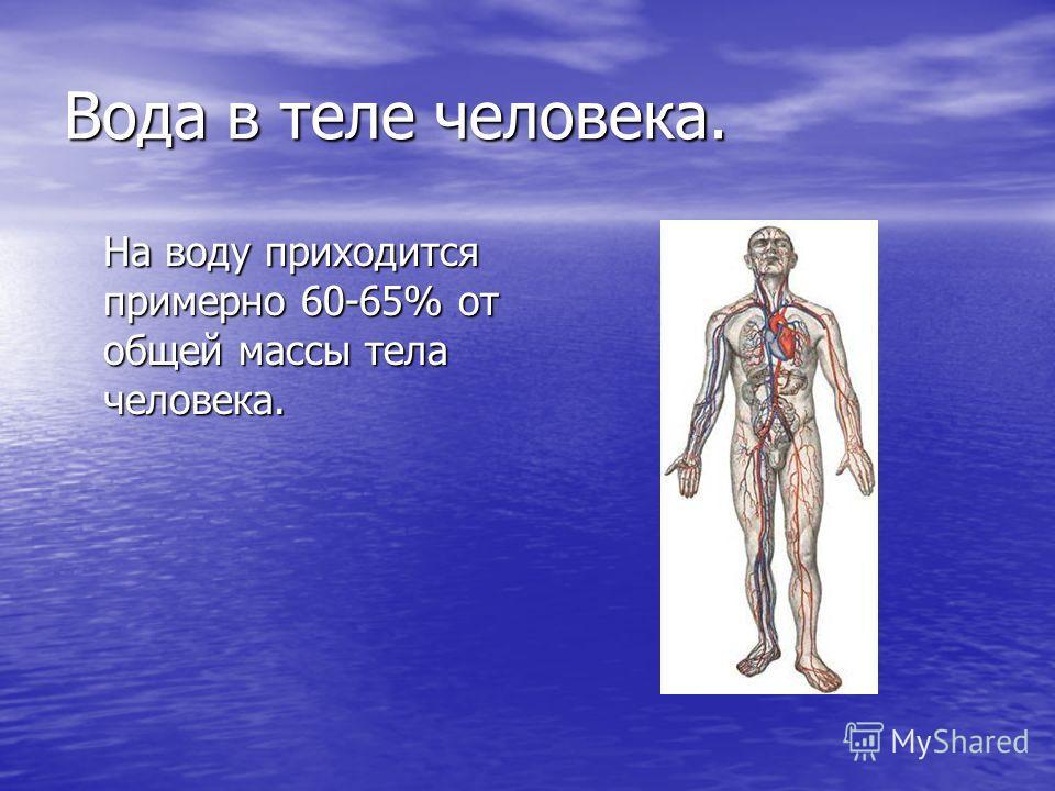 Вода в теле человека. На воду приходится примерно 60-65% от общей массы тела человека.