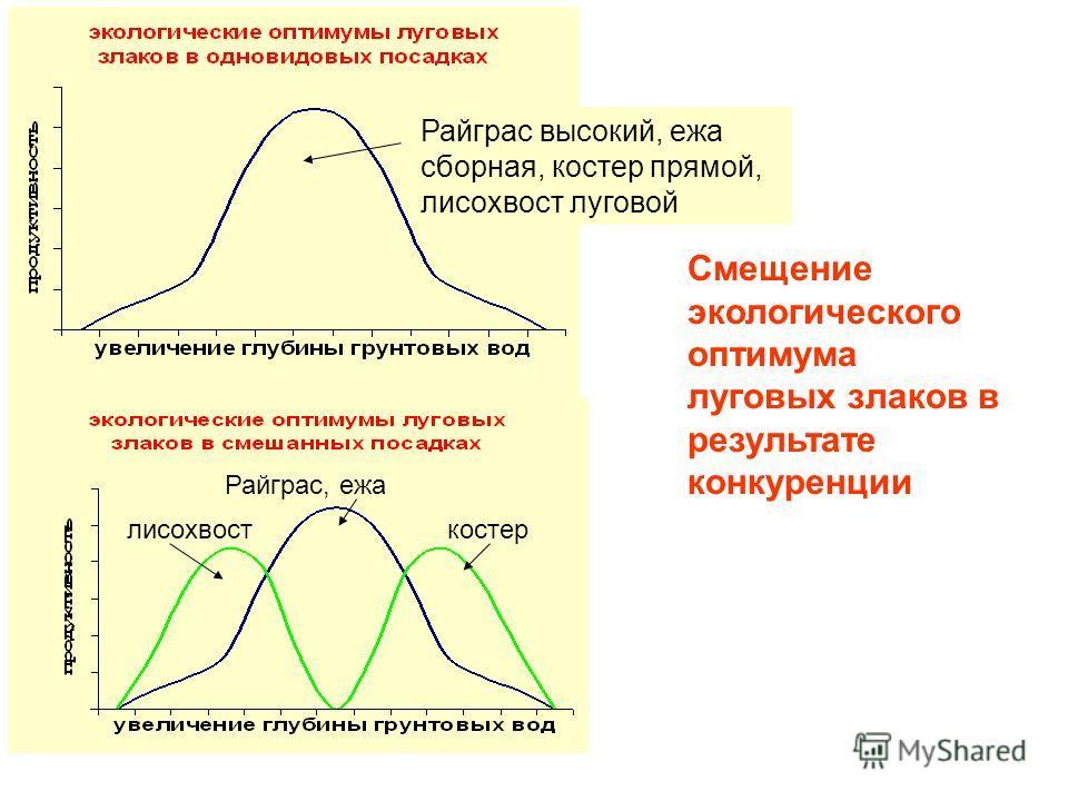 Смещение экологического оптимума луговых злаков в результате конкуренции Райграс высокий, ежа сборная, костер прямой, лисохвост луговой Райграс, ежа костерлисохвост