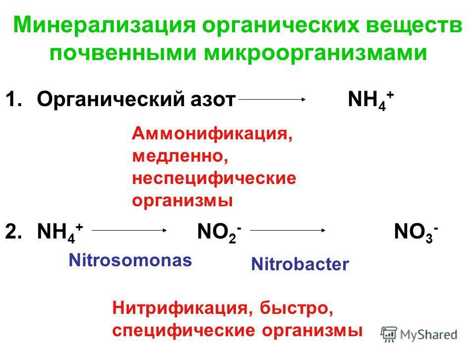 Минерализация органических веществ почвенными микроорганизмами 1.Органический азот NH 4 + 2.NH 4 + NO 2 - NO 3 - Аммонификация, медленно, неспецифические организмы Нитрификация, быстро, специфические организмы Nitrosomonas Nitrobacter