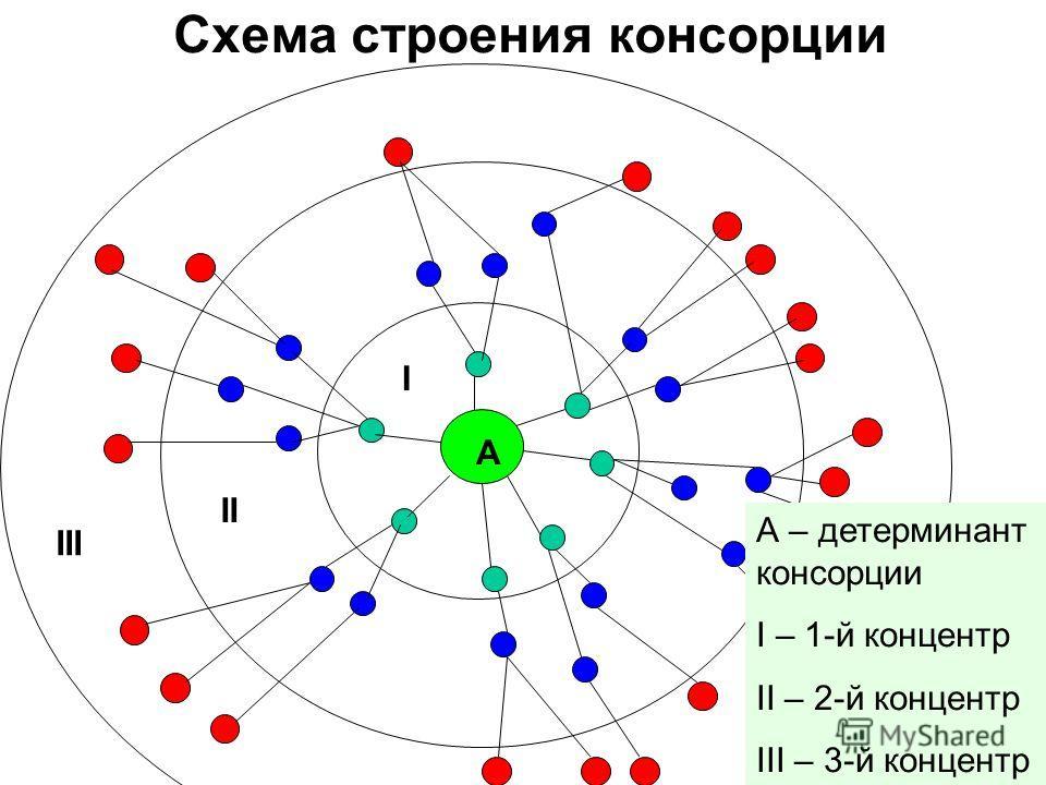 Схема строения консорции A А – детерминант консорции I – 1-й концентр II – 2-й концентр III – 3-й концентр I II III