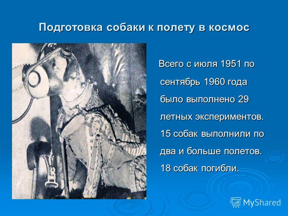 Подготовка собаки к полету в космос Всего с июля 1951 по сентябрь 1960 года было выполнено 29 летных экспериментов. 15 собак выполнили по два и больше полетов. 18 собак погибли. Всего с июля 1951 по сентябрь 1960 года было выполнено 29 летных экспери