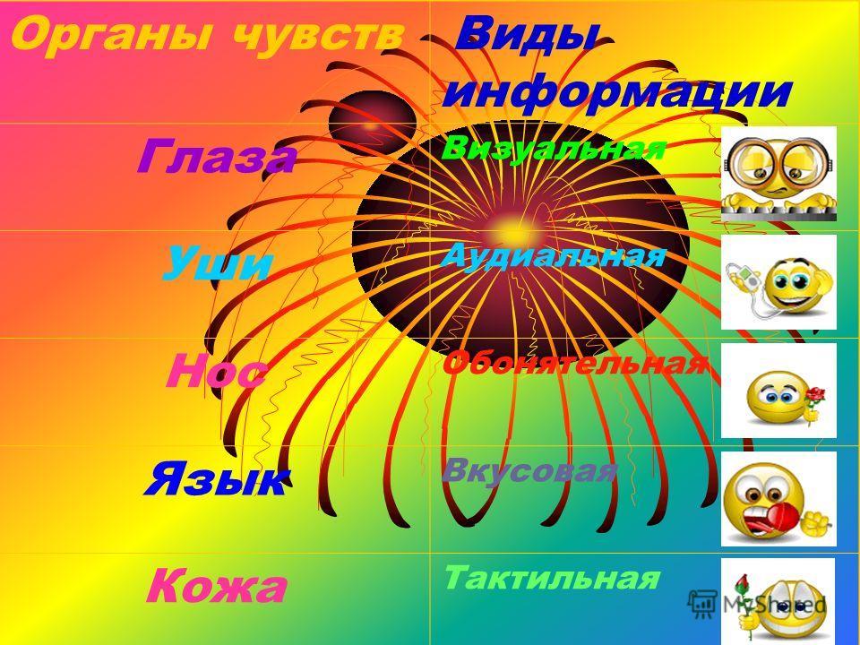 Органы чувств Виды информации Глаза Визуальная Уши Аудиальная Нос Обонятельная Язык Вкусовая Кожа Тактильная