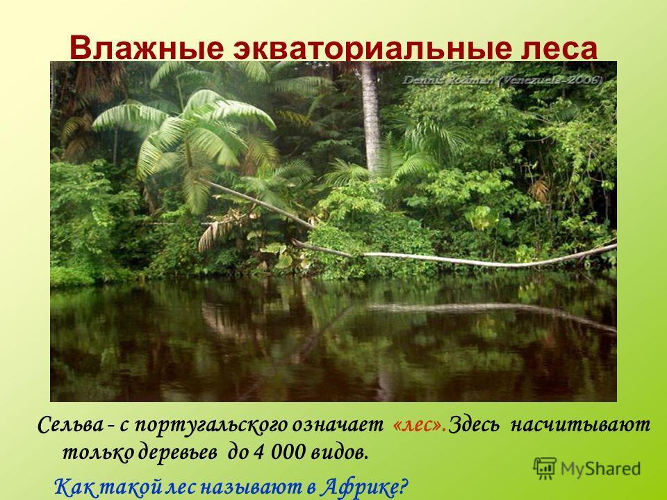 Влажные экваториальные леса Сельва - с португальского означает «лес».Здесь насчитывают только деревьев до 4 000 видов. Как такой лес называют в Африке?