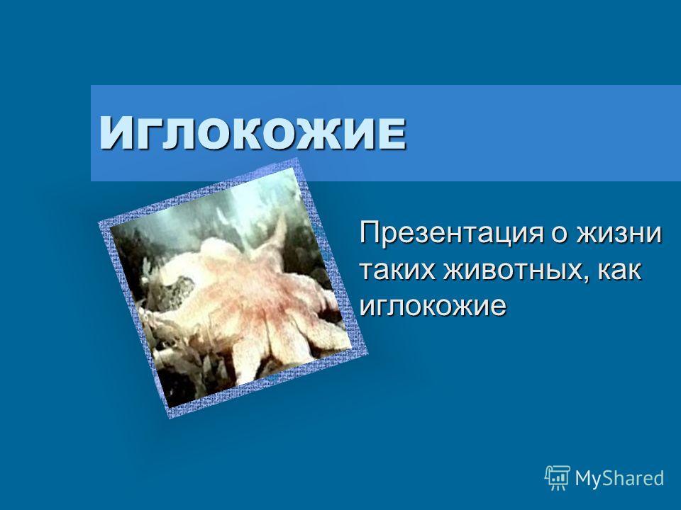 ИГЛОКОЖИЕ Презентация о жизни таких животных, как иглокожие Вставьте эмблему предприятия