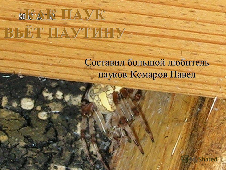 Составил большой любитель пауков Комаров Павел КАК ПАУК ВЬЁТ ПАУТИНУ