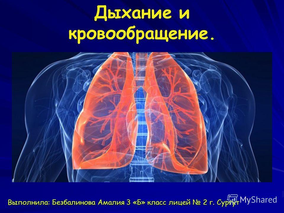 Дыхание и кровообращение. Выполнила: Безбалинова Амалия 3 «Б» класс лицей 2 г. Сургут