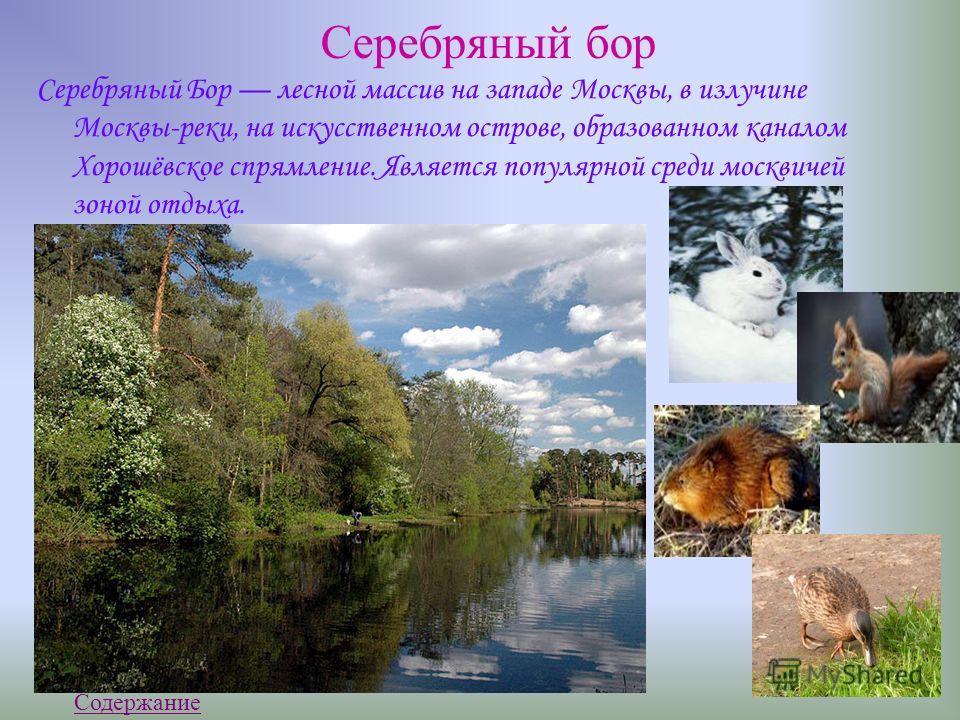 Серебряный б ор Серебряный Бор лесной массив на западе Москвы, в излучине Москвы-реки, на искусственном острове, образованном каналом Хорошёвское спрямление. Является популярной среди москвичей зоной отдыха. Содержание