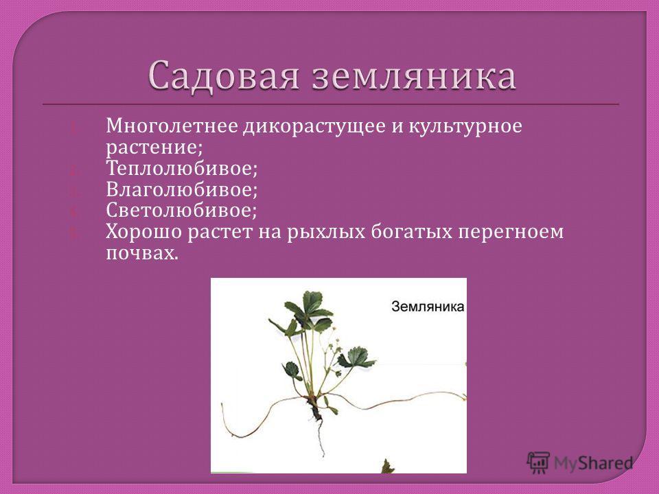 1. Многолетнее дикорастущее и культурное растение ; 2. Теплолюбивое ; 3. Влаголюбивое ; 4. Светолюбивое ; 5. Хорошо растет на рыхлых богатых перегноем почвах.
