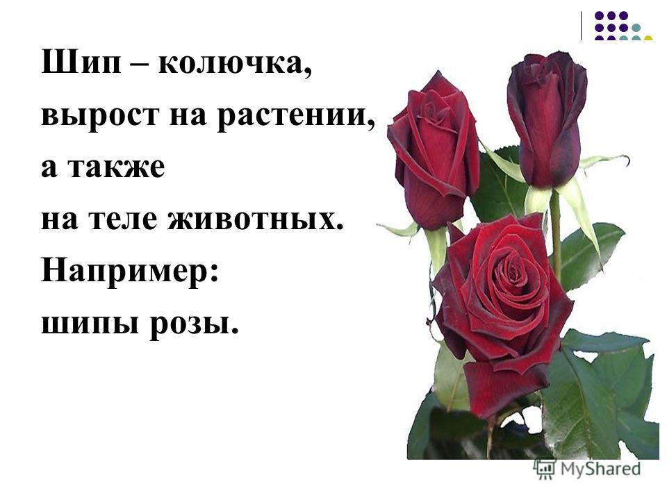Шип – колючка, вырост на растении, а также на теле животных. Например: шипы розы.