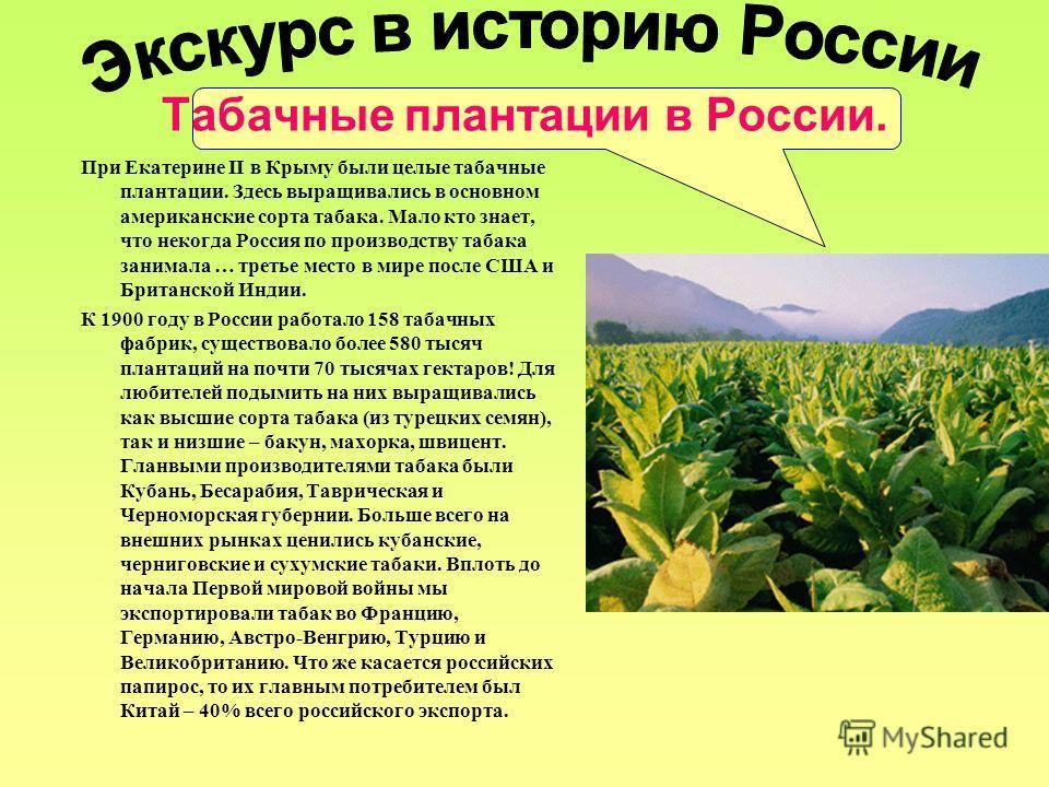 Табачные плантации в России. При Екатерине II в Крыму были целые табачные плантации. Здесь выращивались в основном американские сорта табака. Мало кто знает, что некогда Россия по производству табака занимала … третье место в мире после США и Британс