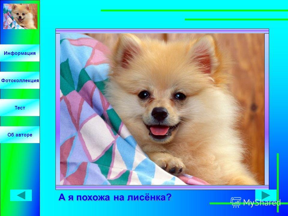 Информация Фотоколлекция Тест Об авторе А я похожа на лисёнка?