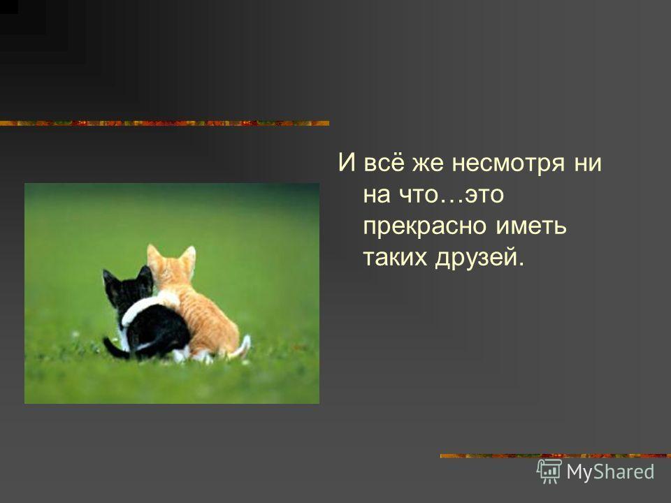 И всё же несмотря ни на что…это прекрасно иметь таких друзей.