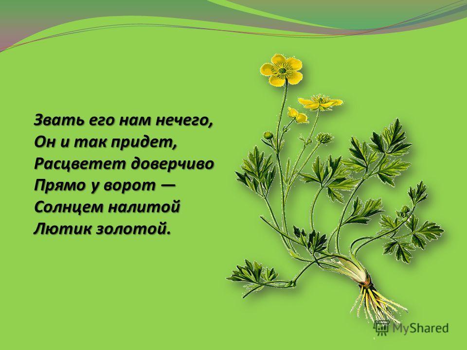 Звать его нам нечего, Он и так придет, Расцветет доверчиво Прямо у ворот Солнцем налитой Лютик золотой.
