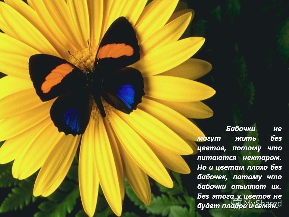 Бабочки не могут жить без цветов, потому что питаются нектаром. Но и цветам плохо без бабочек, потому что бабочки опыляют их. Без этого у цветов не будет плодов и семян.